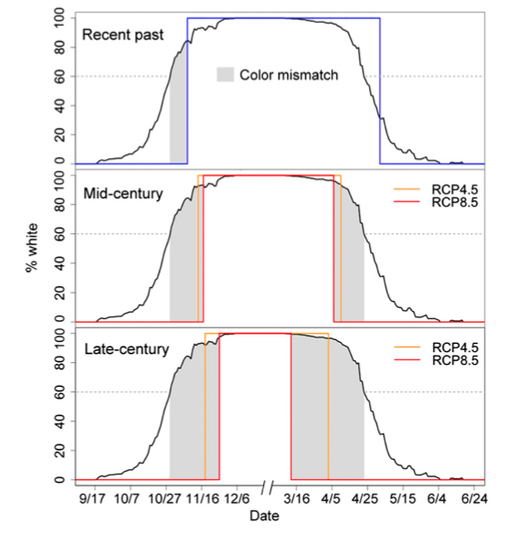 Projections of increasing seasonal color mismatch in the future. The black line for all panels shows average phenology of hare seasonal color molt across the 3 y of the field study. The blue line shows mean modeled snow duration for the recent past (1970–1999). The orange and red lines show the future (mid-century and late-century) mean modeled snow duration for different emissions scenarios. The gray highlighted regions represent coat color mismatch, where white hares (?60%) would be expected on a snowless background. As the duration with snow on the ground decreases in the future, mismatch will increase by as much as fourfold in the mid-century and eightfold in the late-century.