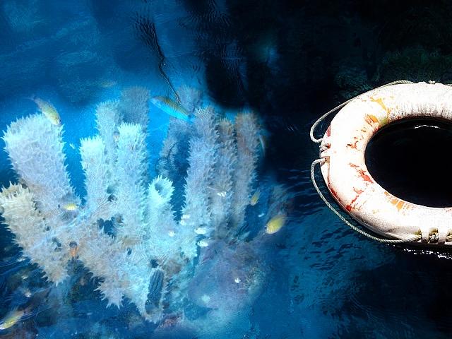Coral image credit: Nick Hobgood via Wikimedia Commons. Lifesaver image credit: dharma communications via Flickr.